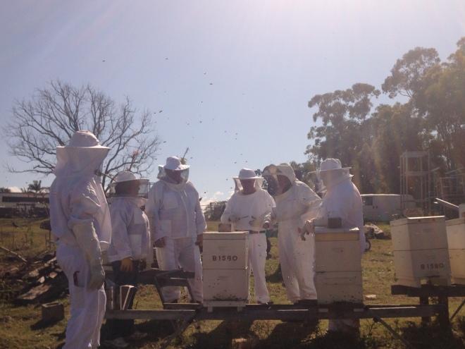 North Brisbane Bee Keepers - Bee School