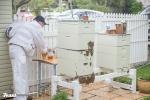 Flow hive honey harvest
